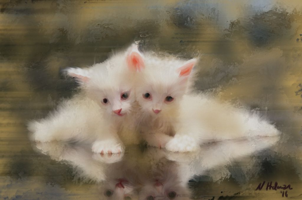 twin sister kittens