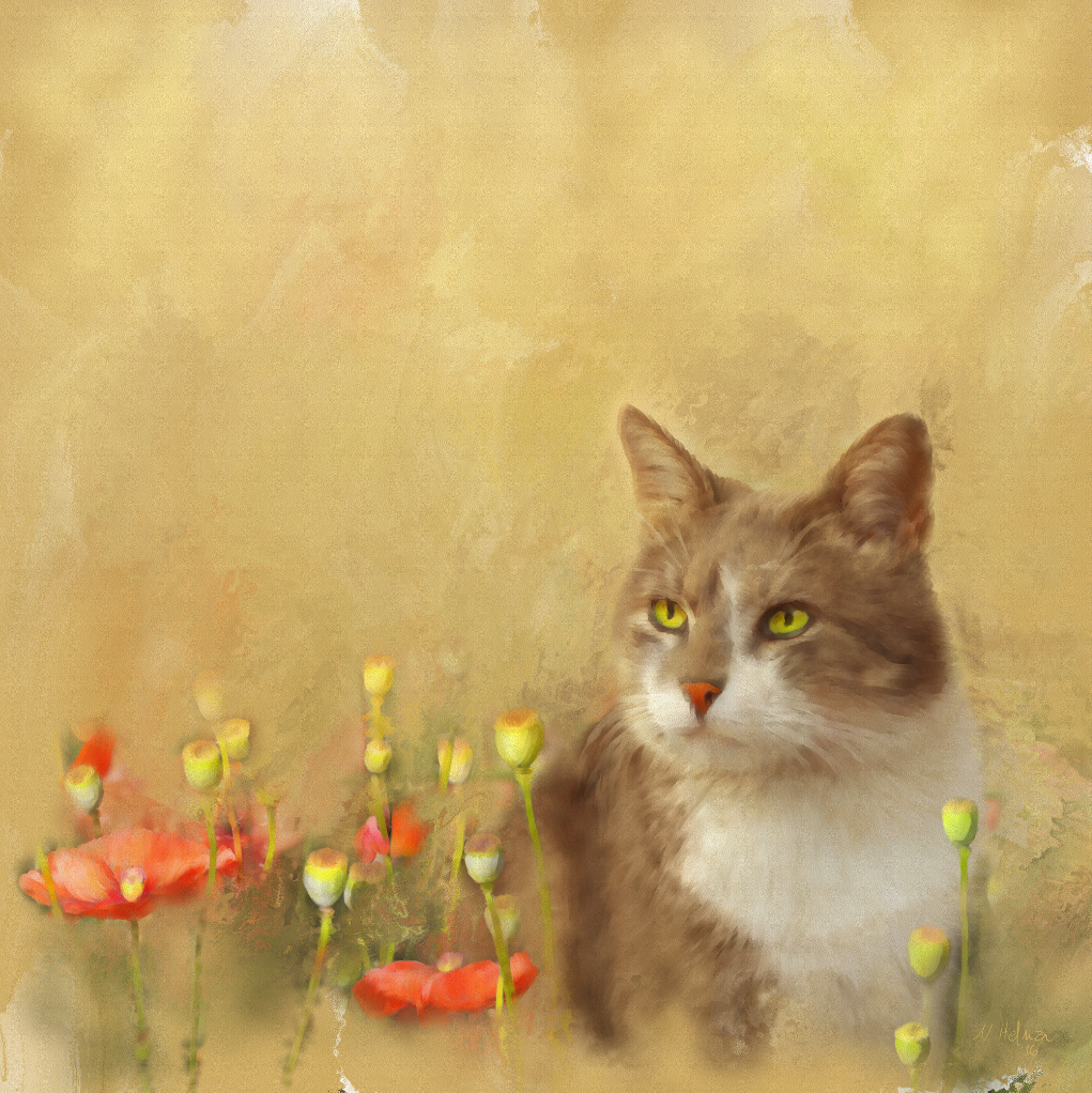 Cat-on-a-poppy-field