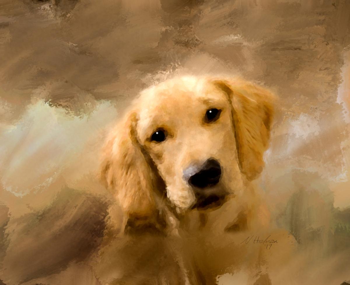 Golden-Puppy