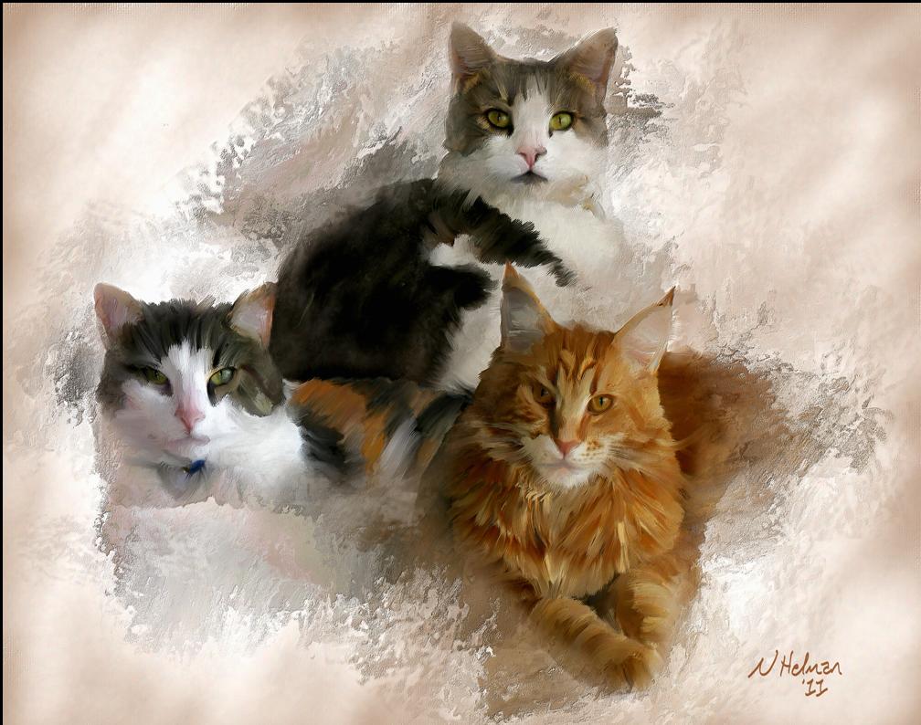 Troyer-kitties